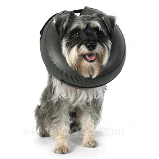 Tilbehør til hunden