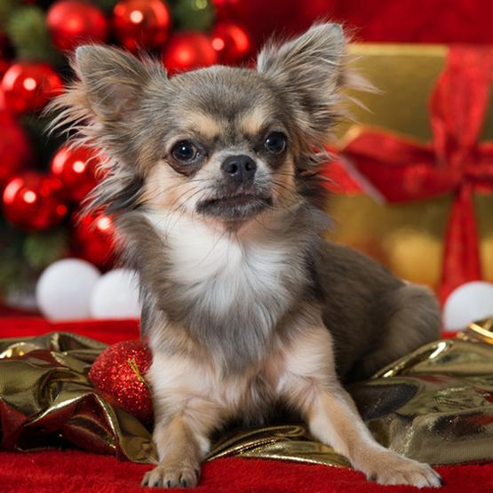 Jul-nytår med Hunden