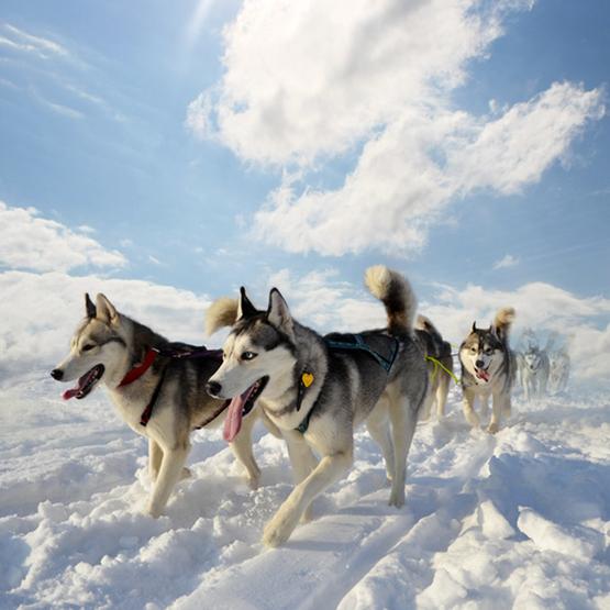 Vinter med hunden