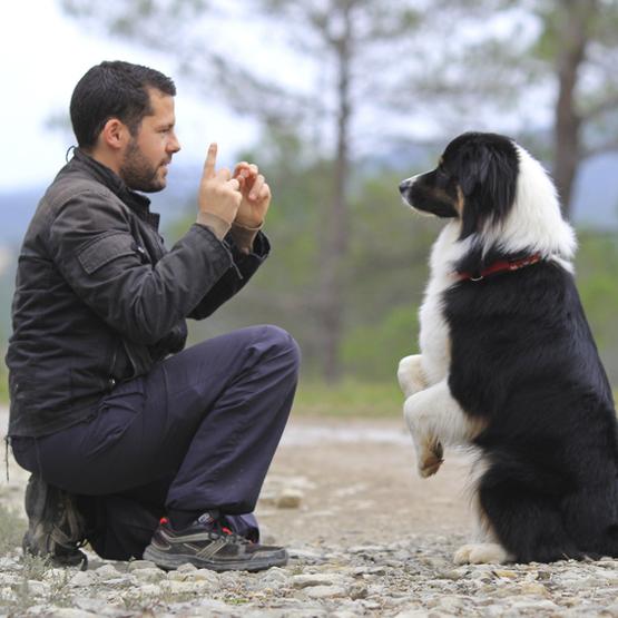 Træning af din hund