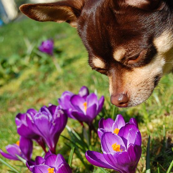 Forår med hunden