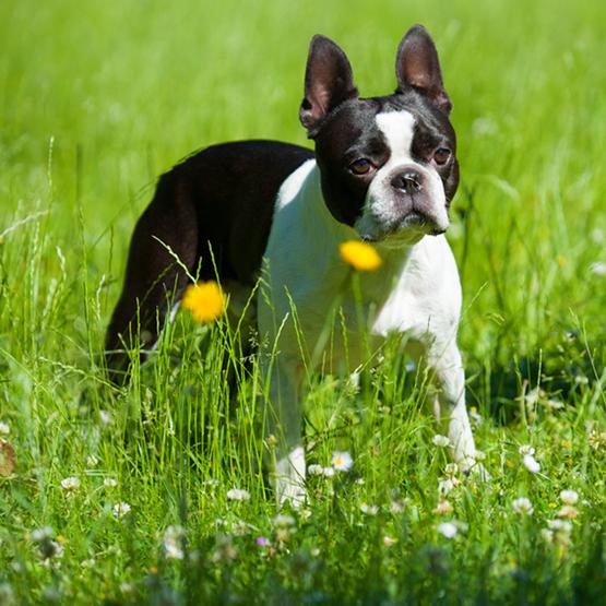 Sommer med hunden