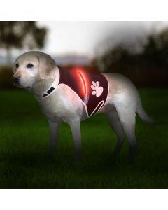 Smart Lysvest til hunde